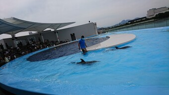 四国最大級『四国水族館』と父母ヶ浜海岸